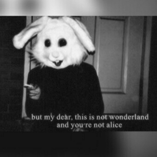 wonderland: but my dear, this is not wonderland  and you're not alice