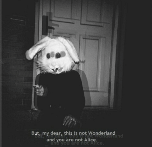 wonderland: But, my dear, this is not Wonderland  nd  and you are not Alice.  and you are hot A