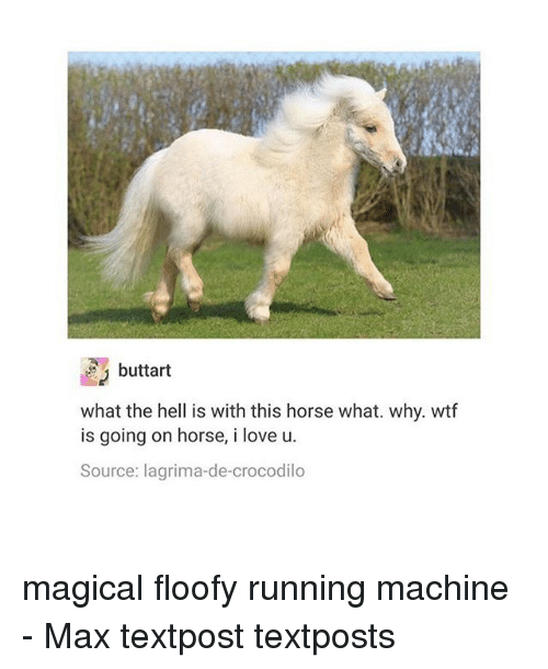 Love, Memes, and Wtf: buttart  what the hell is with this horse what. why. wtf  is going on horse, i love u.  Source: lagrima-de-crocodilo magical floofy running machine - Max textpost textposts