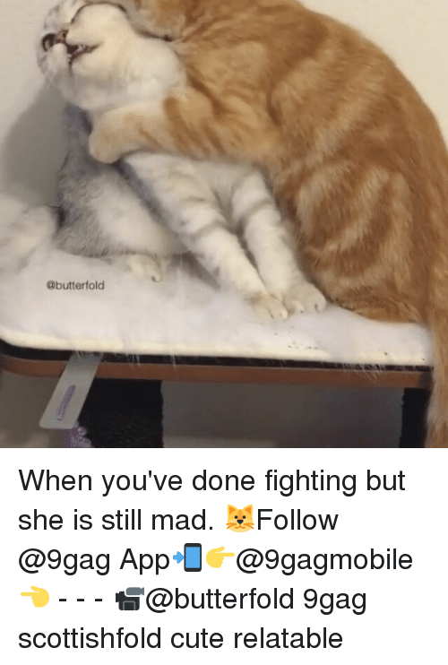 cuteness: @butter fold When you've done fighting but she is still mad. 🐱Follow @9gag App📲👉@9gagmobile👈 - - - 📹@butterfold 9gag scottishfold cute relatable