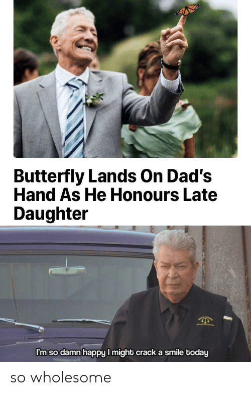 Butterfly: Butterfly Lands On Dad's  Hand As He Honours Late  Daughter  I'm so damn happy I might crack a smile today so wholesome