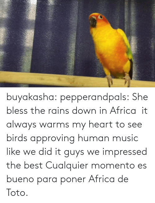 In Africa: buyakasha:  pepperandpals: ‪She bless the rains down in Africa ‬ it always warms my heart to see birds approving human music like we did it guys we impressed the best  Cualquier momento es bueno para poner Africa de Toto.
