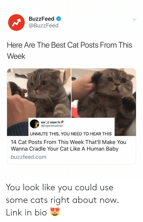 Best Cat: BuzzFeed  @BuzzFeed  Here Are The Best Cat Posts From This  Week  @jingerbreadmin  UNMUTE THIS, YOU NEED TO HEAR THIS  14 Cat Posts From This Week That'll Make You  Wanna Cradle Your Cat Like A Human Baby  buzzfeed.com You look like you could use some cats right about now. Link in bio 😻