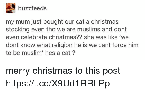 Stocking: buzzfeeds  my mum just bought our cat a christmas  stocking even tho we are muslims and dont  even celebrate christmas?? she was like 'we  dont know what religion he is we cant force him  to be muslim' hes a cat? merry christmas to this post https://t.co/X9Ud1RRLPp