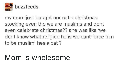 Stocking: buzzfeeds  my mum just bought our cat a christmas  stocking even tho we are muslims and dont  even celebrate christmas?? she was like 'we  dont know what religion he is we cant force him  to be muslim' hes a cat? <p>Mom is wholesome</p>