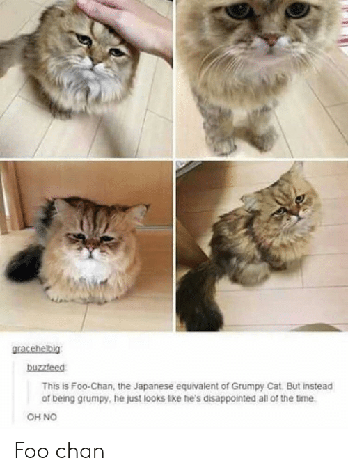 Grumpy Cat: buzzteed  This is Foo-Chan, the Japanese equivalent of Grumpy Cat But instead  of being grumpy, he just looks like he's disappointed all of the time  OH NO Foo chan