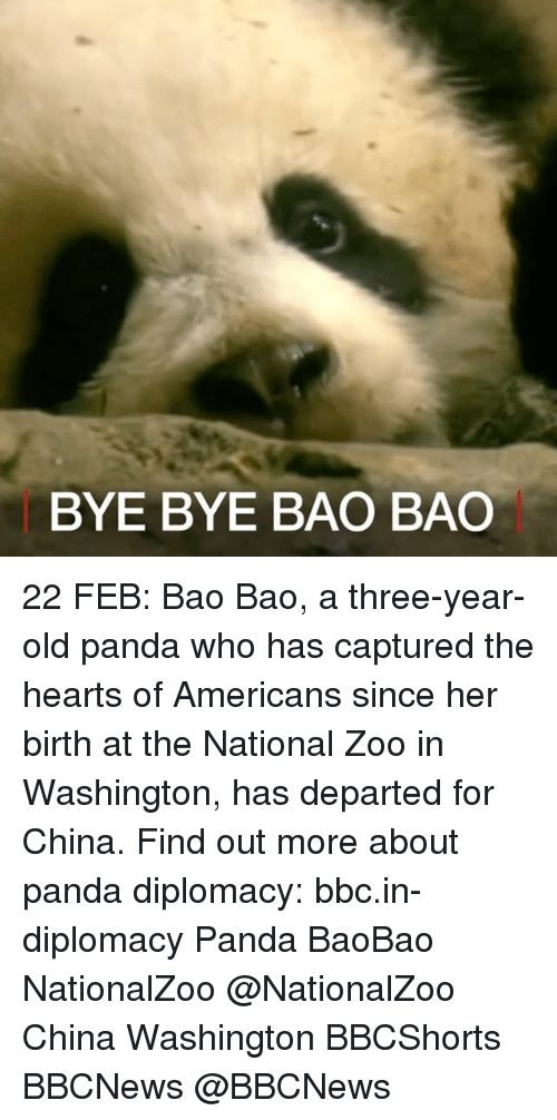 Memes, 🤖, and Bbc: BYE BYE BAO BAO 22 FEB: Bao Bao, a three-year-old panda who has captured the hearts of Americans since her birth at the National Zoo in Washington, has departed for China. Find out more about panda diplomacy: bbc.in-diplomacy Panda BaoBao NationalZoo @NationalZoo China Washington BBCShorts BBCNews @BBCNews