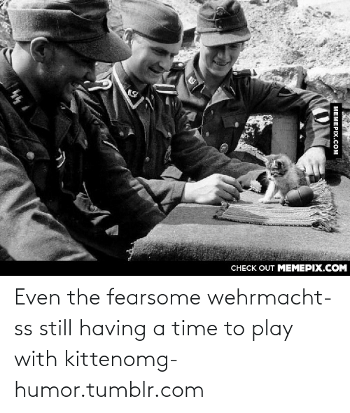 Wehrmacht: CНECK OUT MЕМЕРIХ.COM  МЕМЕРIХ.сом Even the fearsome wehrmacht-ss still having a time to play with kittenomg-humor.tumblr.com