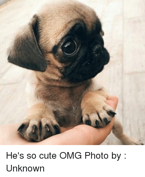 Cute, Memes, and Omg: C He's so cute OMG Photo by : Unknown