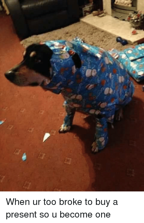 Dogs: C latinas When ur too broke to buy a present so u become one