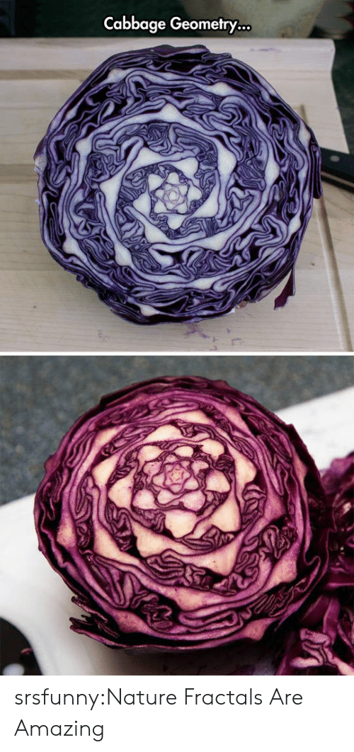 cabbage: Cabbage Geometry... srsfunny:Nature Fractals Are Amazing