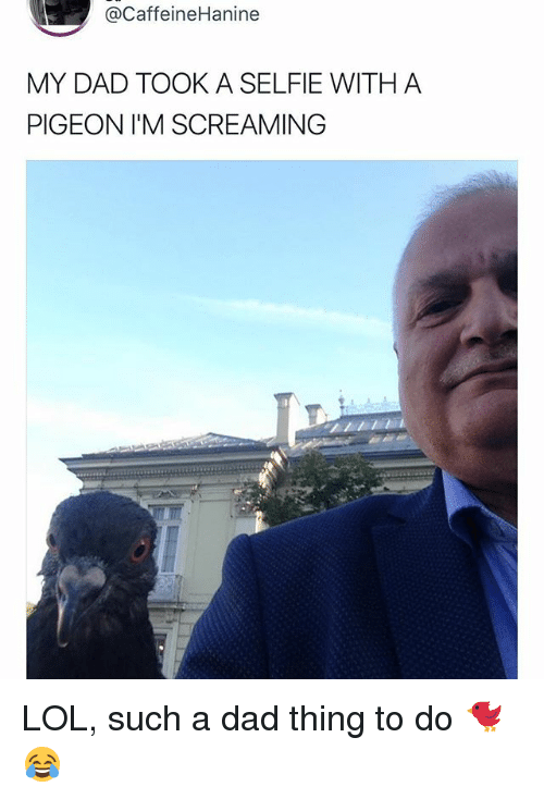 Dad, Lol, and Selfie: @CaffeineHanine  MY DAD TOOK A SELFIE WITH A  PIGEON I'M SCREAMING LOL, such a dad thing to do 🐦😂