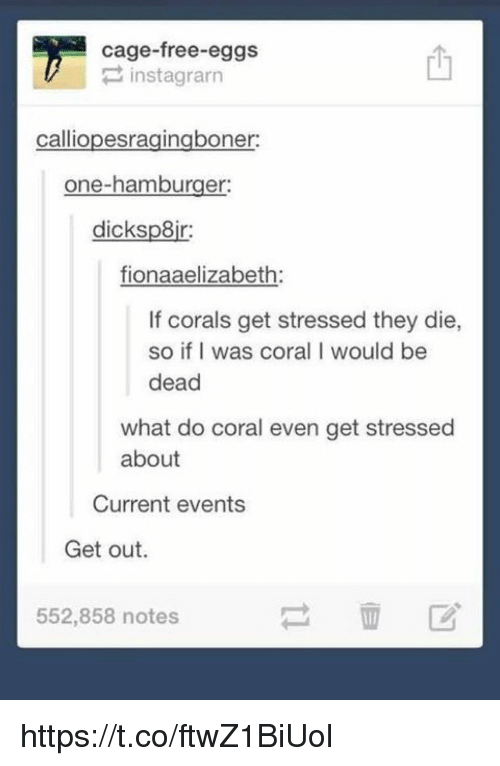 Free, Current Events, and Hamburger: cage-free eggs  P instagrarn  calliopesragingboner:  one-hamburger:  dicksp8ir:  fionaaelizabeth:  If corals get stressed they die,  so if I was coral I would be  dead  what do coral even get stressed  about  Current events  Get out.  552,858 notes https://t.co/ftwZ1BiUol