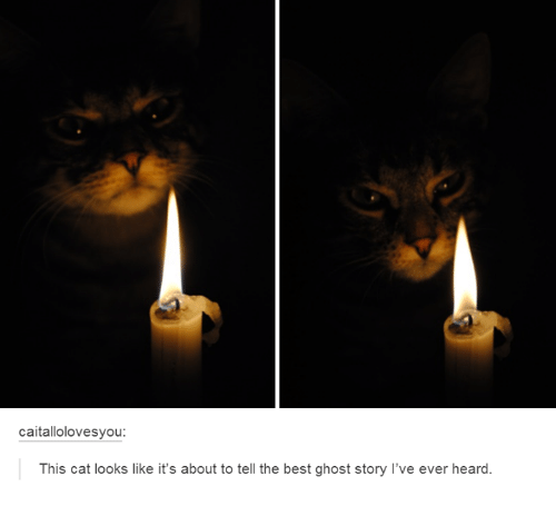 Memes, Best, and Ghost: caitallolovesyou  This cat looks like it's about to tell the best ghost story l've ever heard.