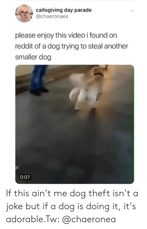 orn: caitsgiving day parade  y @chaeronaea  please enjoy this video i found orn  reddit of a dog trying to steal another  smaller dog  0:07 If this ain't me dog theft isn't a joke but if a dog is doing it, it's adorable.Tw: @chaeronea