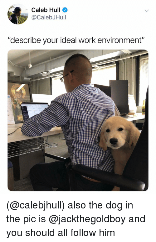 """hull: Caleb Hull  @CalebJHull  """"describe your ideal work environment""""  30 (@calebjhull) also the dog in the pic is @jackthegoldboy and you should all follow him"""