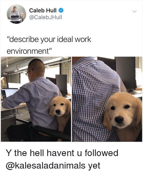 """hull: Caleb Hull  @CalebJHull  """"describe your ideal work  environment"""" Y the hell havent u followed @kalesaladanimals yet"""