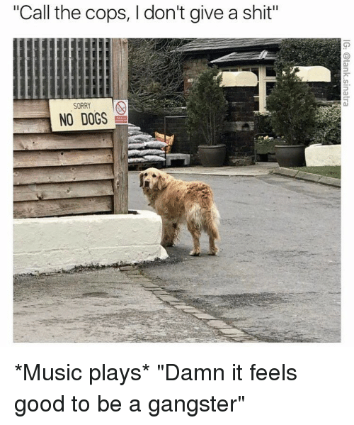 "Dogs, Funny, and Music: ""Call the cops, I don't give a shit""  SORRY  NO DOGS *Music plays* ""Damn it feels good to be a gangster"""