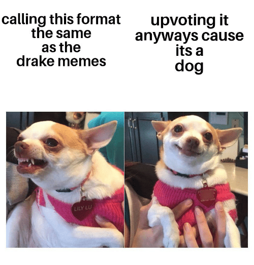 lily lu: calling this format  the same  as the  drake memes  upvoting it  anyways cause  its a  dog  LILY LU