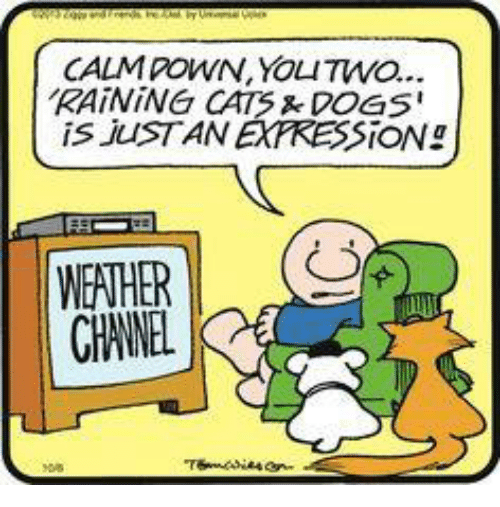 rain cat: CALM POWN, YOLITWO...  RAINING CATS DOGS  is JUST AN EXPRESSION!  WEATHER  CHANEL