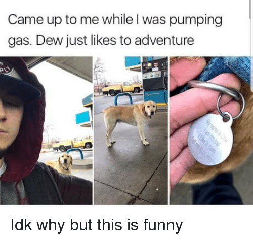 Pumping: Came up to me while I was pumping  gas. Dew just likes to adventure Idk why but this is funny