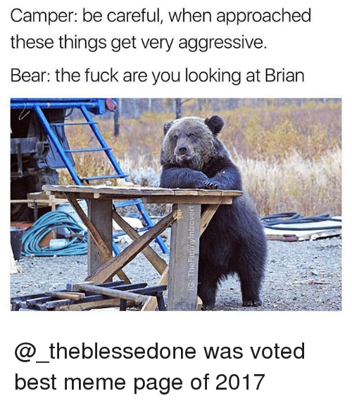 Meme, Bear, and Best: Camper: be careful, when approached  these things get very aggressive.  Bear: the fuck are you looking at Brian @_theblessedone was voted best meme page of 2017