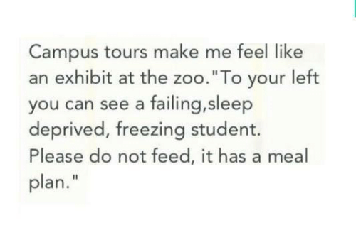 """Exhibit: Campus tours make me feel like  an exhibit at the zoo.""""To your left  you can see a failing,sleep  deprived, freezing student.  Please do not feed, it has a meal  plan."""""""