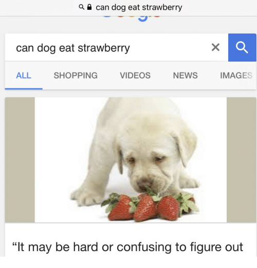 "News, Shopping, and Videos: can dog eat strawberry  can dog eat strawberry  ALL  SHOPPING  VIDEOS  NEWS  IMAGES  ""It may be hard or confusing to figure out"