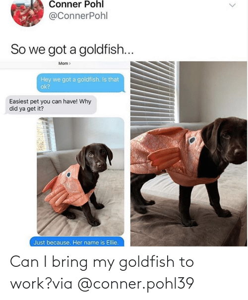 Bring: Can I bring my goldfish to work?via @conner.pohl39
