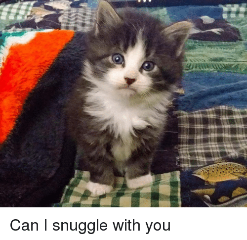 Snuggle With You: 25+ Best Memes About Memes