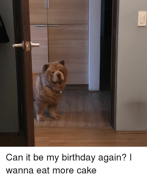 Birthday, Memes, and Cake: Can it be my birthday again? I wanna eat more cake