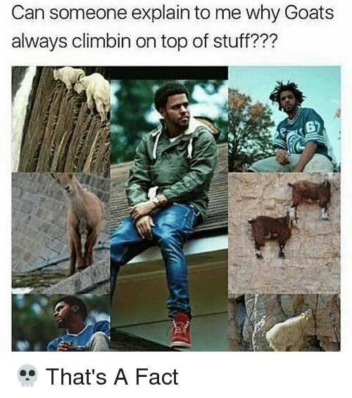 Memes, Goat, and 🤖: Can someone explain to me why Goats  always climbin on top of stuff??? 💀 That's A Fact