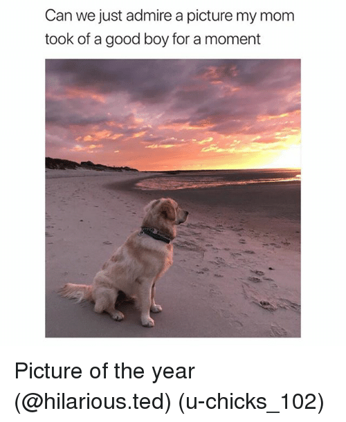 Funny, Ted, and Good: Can we just admire a picture my mom  took of a good boy for a moment Picture of the year (@hilarious.ted) (u-chicks_102)