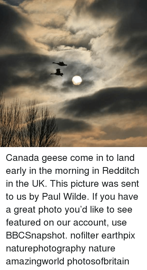 Memes, Canada, and Nature: Canada geese come in to land early in the morning in Redditch in the UK. This picture was sent to us by Paul Wilde. If you have a great photo you'd like to see featured on our account, use BBCSnapshot. nofilter earthpix naturephotography nature amazingworld photosofbritain