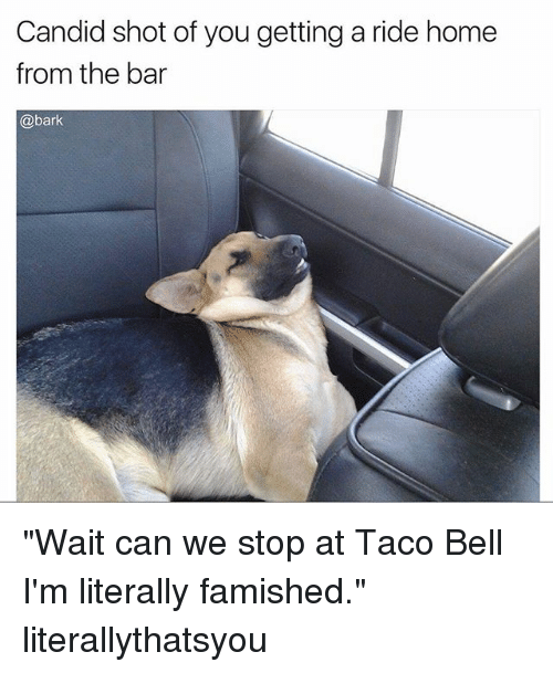 """Candide: Candid shot of you getting a ride home  from the bar  @bark """"Wait can we stop at Taco Bell I'm literally famished."""" literallythatsyou"""