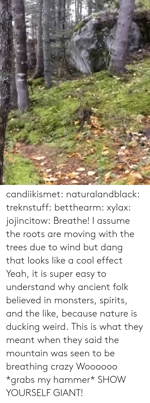 roots: candiikismet: naturalandblack:   treknstuff:  betthearm:  xylax:  jojincitow: Breathe! I assume the roots are moving with the trees due to wind but dang that looks like a cool effect   Yeah, it is super easy to understand why ancient folk believed in monsters, spirits, and the like, because nature is ducking weird.  This is what they meant when they said the mountain was seen to be breathing  crazy   Woooooo   *grabs my hammer* SHOW YOURSELF GIANT!