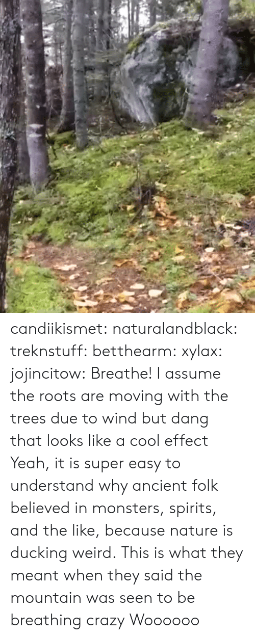 roots: candiikismet: naturalandblack:   treknstuff:  betthearm:  xylax:  jojincitow: Breathe! I assume the roots are moving with the trees due to wind but dang that looks like a cool effect   Yeah, it is super easy to understand why ancient folk believed in monsters, spirits, and the like, because nature is ducking weird.  This is what they meant when they said the mountain was seen to be breathing  crazy   Woooooo