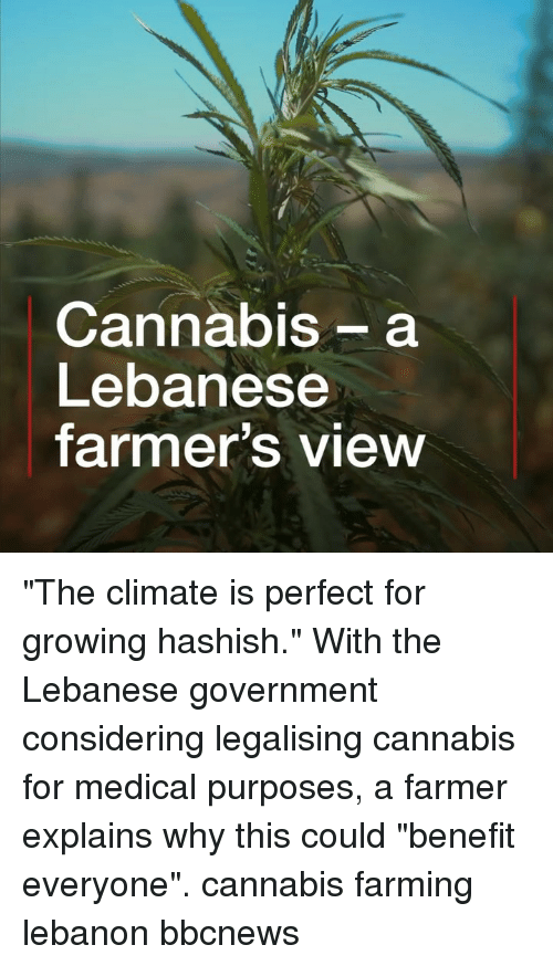 "Lebanese: Cannabis- a  Lebanese  farmer's view ""The climate is perfect for growing hashish."" With the Lebanese government considering legalising cannabis for medical purposes, a farmer explains why this could ""benefit everyone"". cannabis farming lebanon bbcnews"
