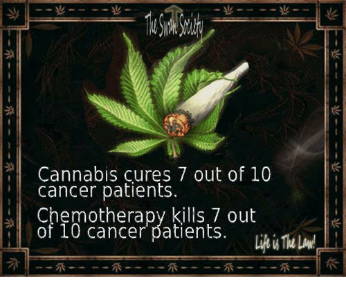 Cannabis: Cannabis cures 7 out of 10  cancer patients  Chemotherapy kills 7 out  of 10 cancer patients
