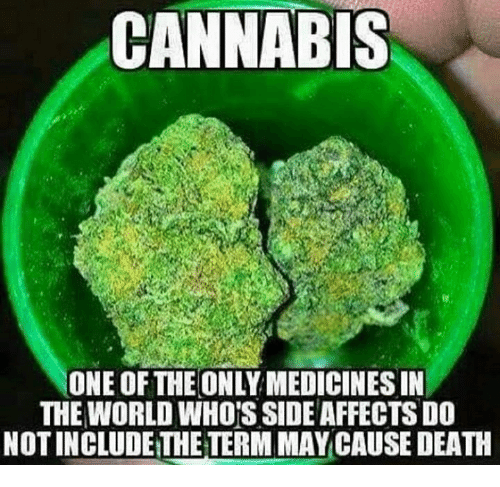 Cannabis: CANNABIS  ONE OF THE ONLY MEDICINESIN  THE WORLD WHOS SIDE AFFECTS DO  NOTINCLUDE THE TERM MAY CAUSE DEATH
