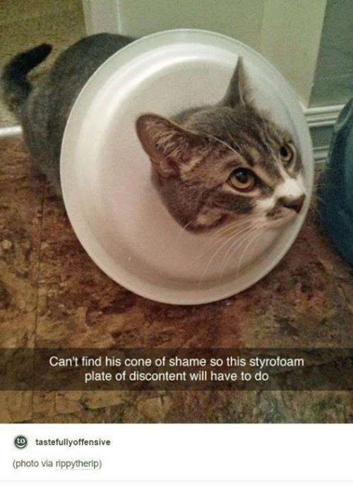 Memes, 🤖, and Styrofoam: Can't find his cone of shame so this styrofoam  plate of discontent will have to do  tastefully offensive  (photo via rippytherip)
