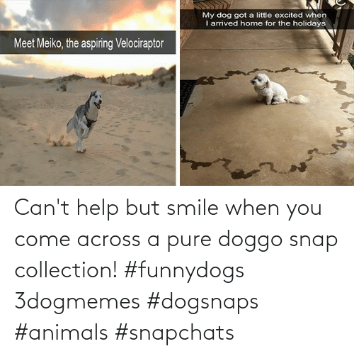 pure: Can't help but smile when you come across a pure doggo snap collection! #funnydogs 3dogmemes #dogsnaps #animals #snapchats