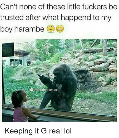 Funny, Boy, and Boys: Can't none of these little fuckers be  trusted after what happend to my  boy harambe  S@explicitmemes Keeping it G real lol