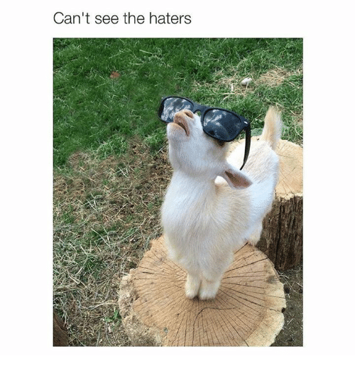 Memes, 🤖, and Hater: Can't see the haters