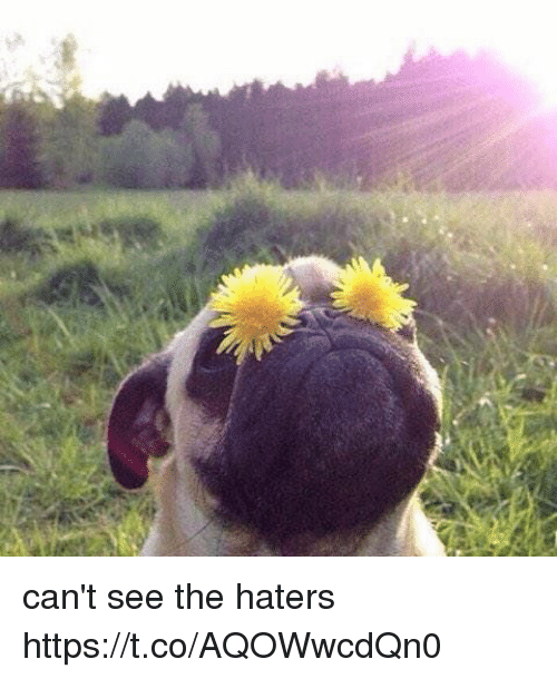 Cant See The Haters: can't see the haters https://t.co/AQOWwcdQn0