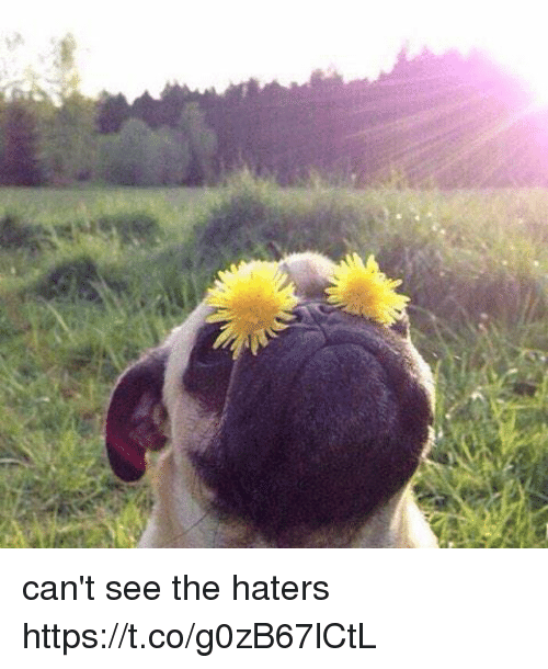 Cant See The Haters: can't see the haters https://t.co/g0zB67lCtL