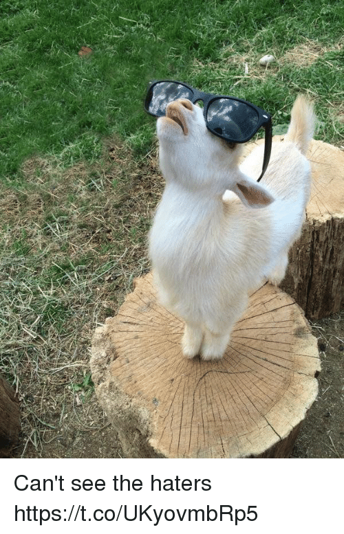 Cant See The Haters: Can't see the haters https://t.co/UKyovmbRp5