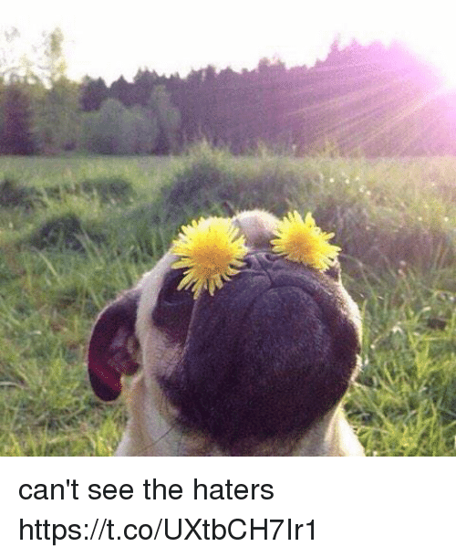 Cant See The Haters: can't see the haters https://t.co/UXtbCH7Ir1