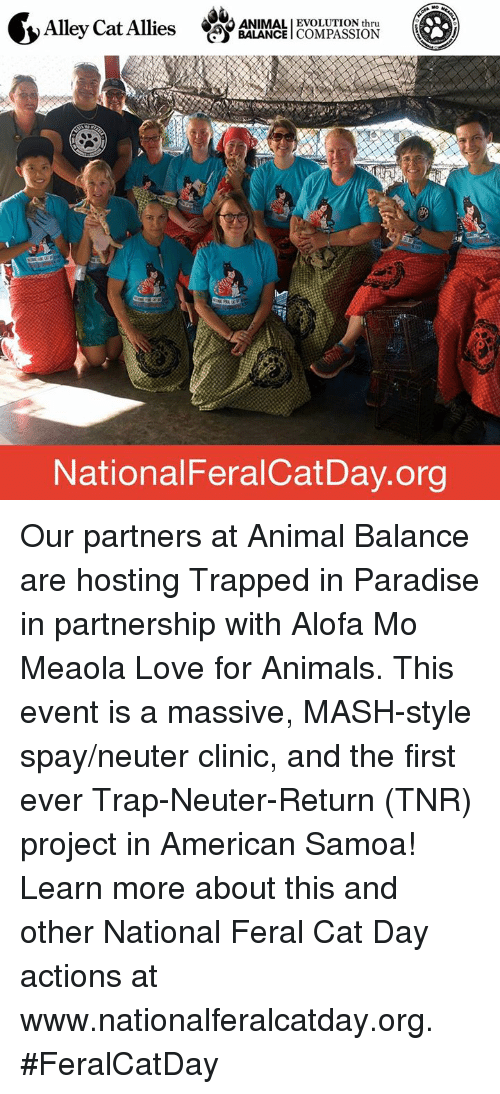 Animals, Anime, and Cats: CAO ANIMALI EVOLUTION thru  Alley Cat Allies  BALANCE  COMPASSION  National FeralCatDay.org Our partners at Animal Balance are hosting Trapped in Paradise in partnership with Alofa Mo Meaola Love for Animals. This event is a massive, MASH-style spay/neuter clinic, and the first ever Trap-Neuter-Return (TNR) project in American Samoa!    Learn more about this and other National Feral Cat Day actions at www.nationalferalcatday.org. #FeralCatDay
