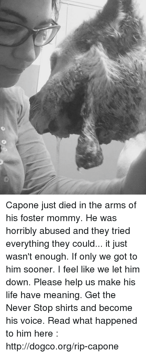 capon: Capone just died in the arms of his foster mommy. He was horribly abused and they tried everything they could... it just wasn't enough. If only we got to him sooner. I feel like we let him down. Please help us make his life have meaning. Get the Never Stop shirts and become his voice. Read what happened to him here : http://dogco.org/rip-capone
